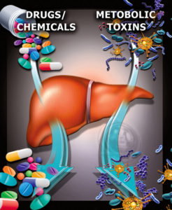 Liver Expelling Toxins