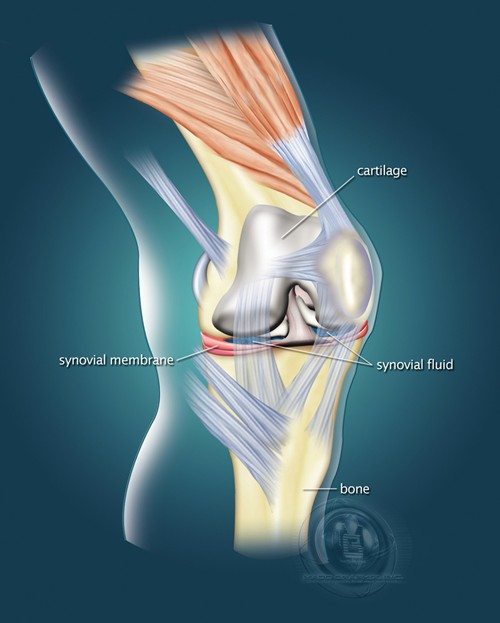 Knee Joint Normal